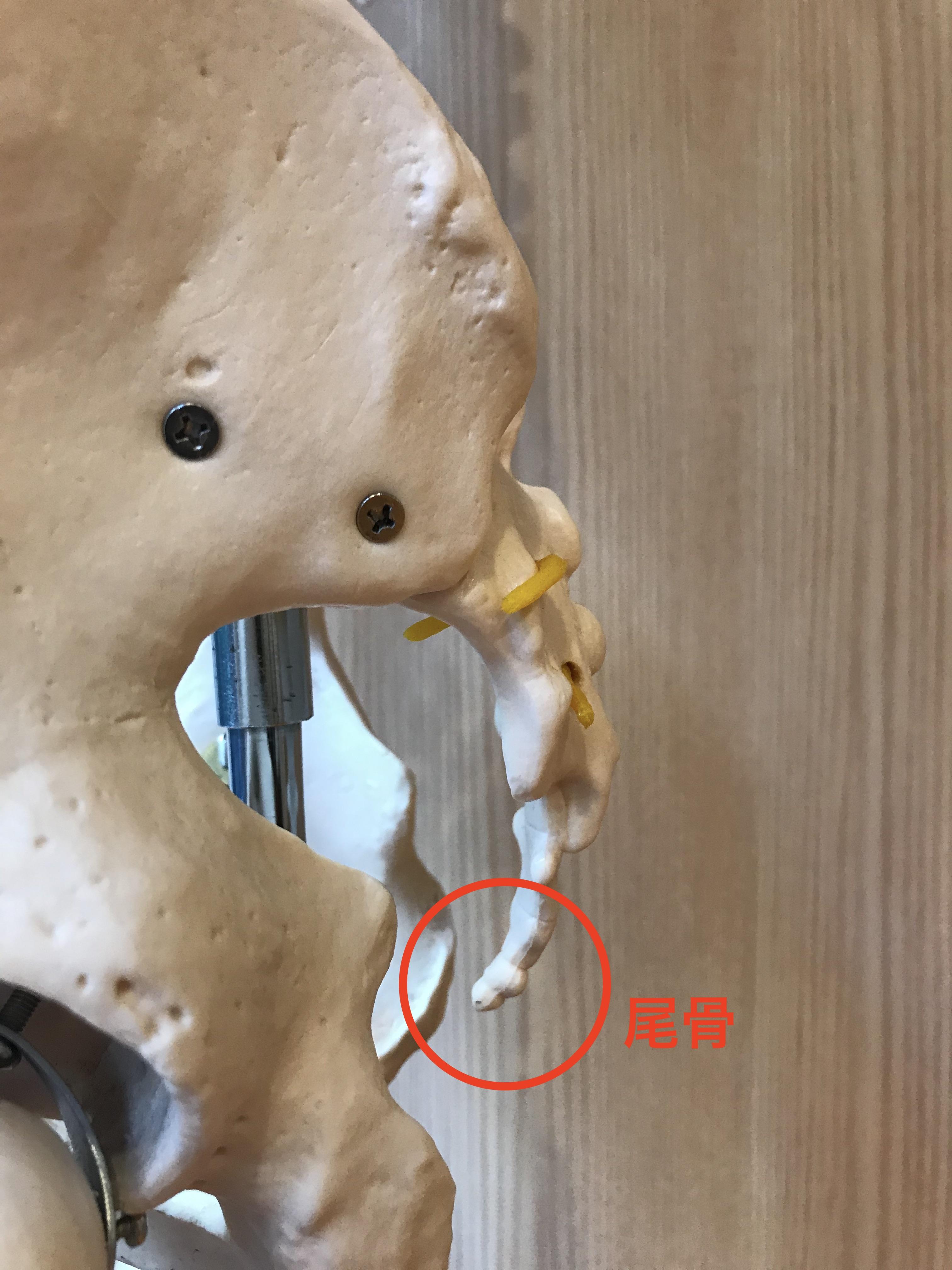 骨折 尾てい骨